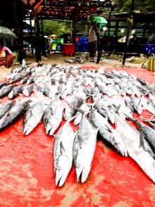 กองปลาสด ๆ จากเรือประมงที่ถูกนำมาวางขาย, ตลาดปลาตะบอเส็ก, หาดตะบอเส็ก, ประเทศเมียนมา