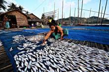 แผงตากปลาบริเวณชุมชนชาวประมงกว๊านตะมอปึย